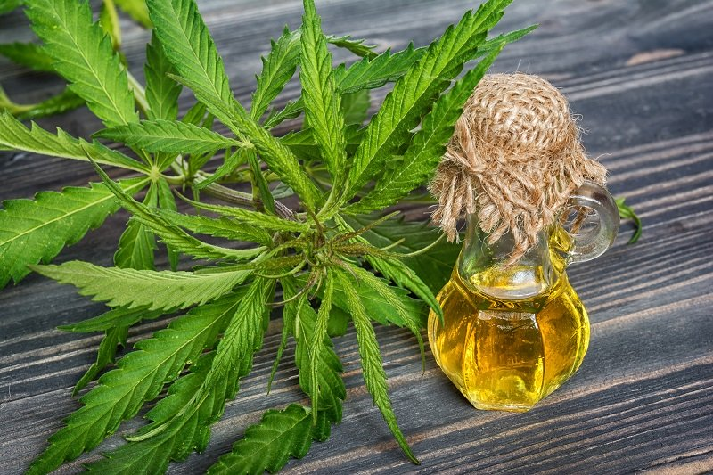 Cannabidiol Explained
