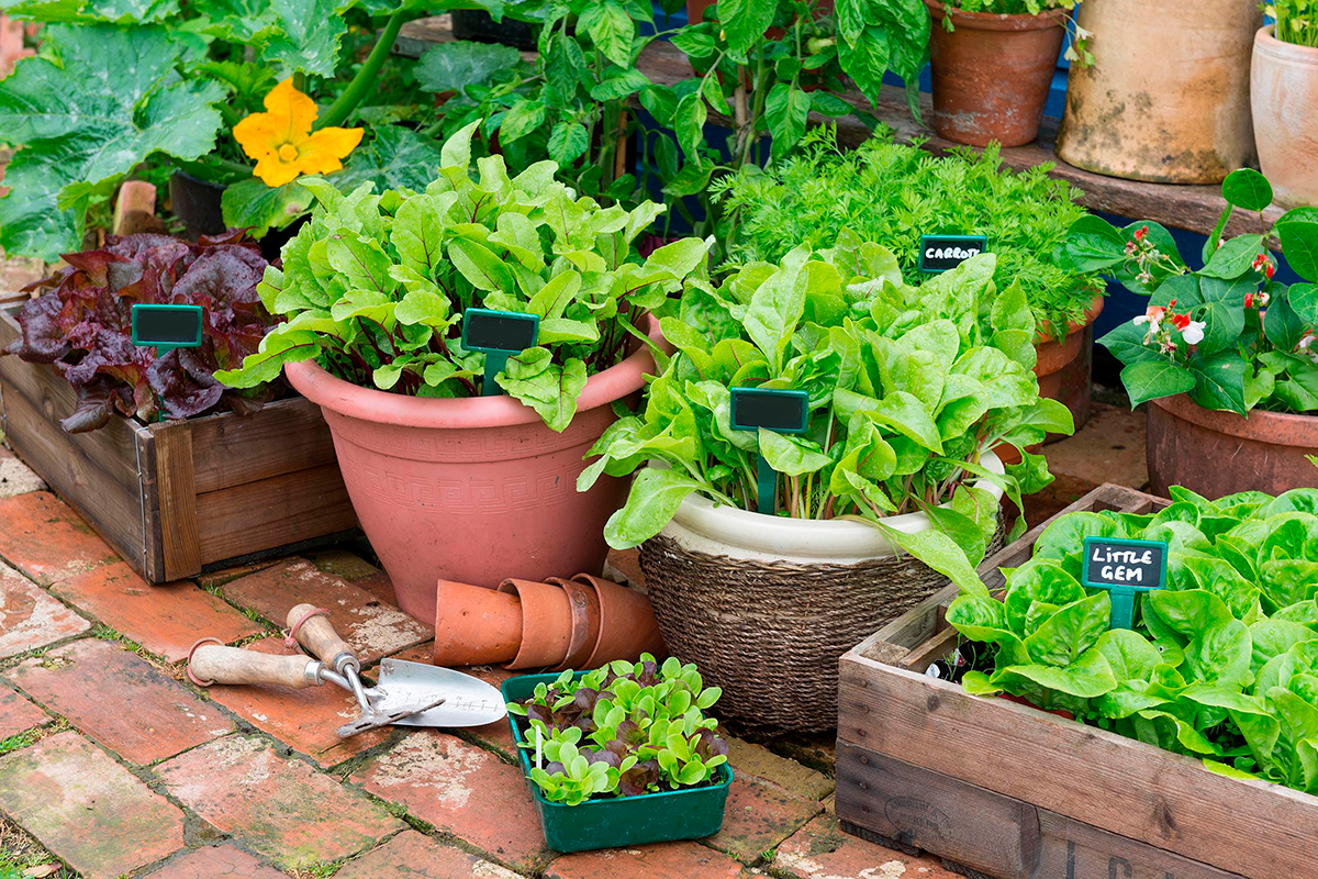 Pros and cons of growing vegetable seeds indoors vs. outdoors